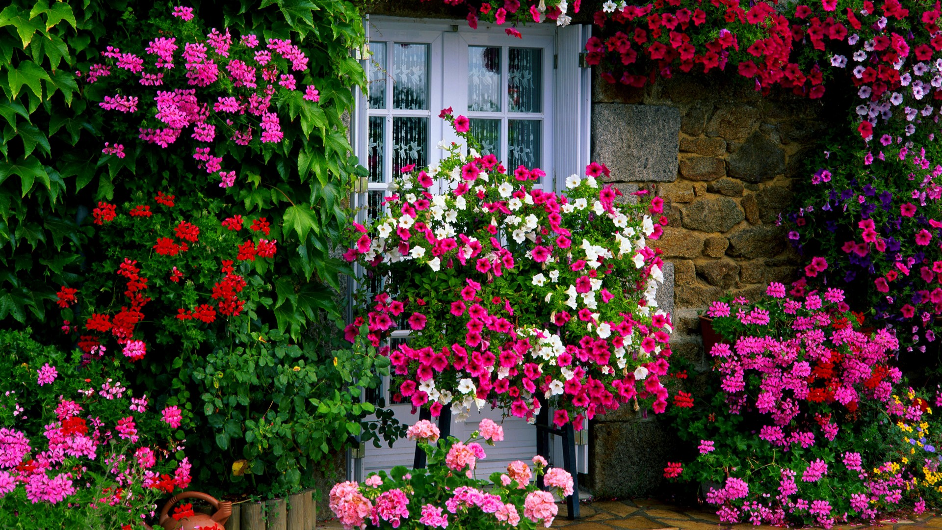 Which Garden-Flowers Can You Grow In Serbia? - 2020 Guide ...